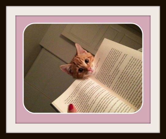 chat roux livre
